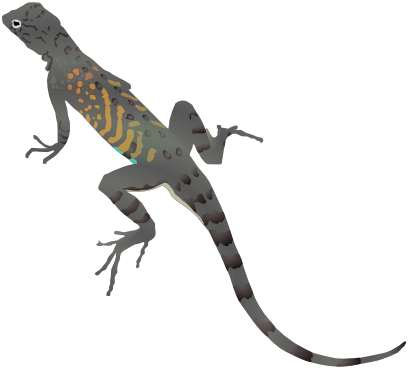 Download free animal lizard icon