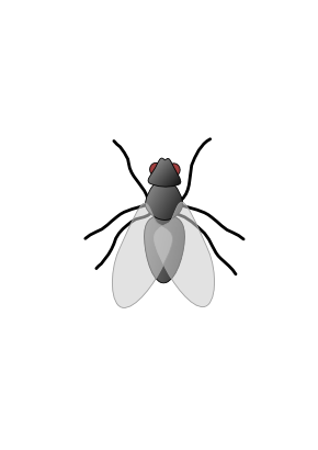 Download free animal fly insect icon